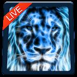 Lion Magic Touch Live wallpaper 2018